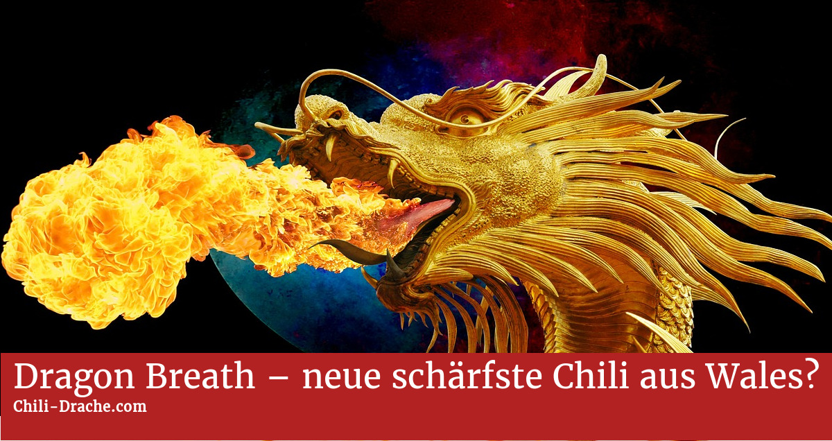 dragon breath neue sch rfste chili aus wales chili drache. Black Bedroom Furniture Sets. Home Design Ideas