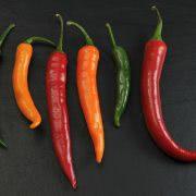 Bild Chili Vielfalt