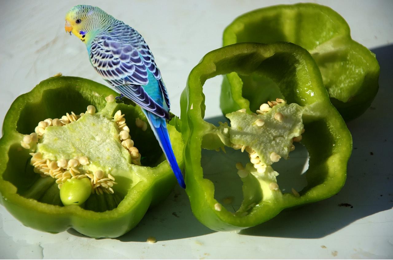 Bild Chili und Vogel