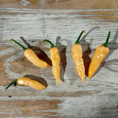 Aji Colobiano white