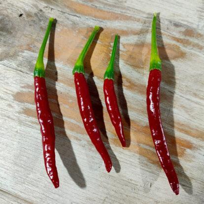 Hontaka Chilis